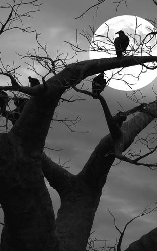 PHOTOWALL / Spooky Tree - b/w (e1795)
