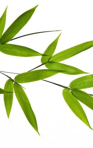 PHOTOWALL / Bamboo Leaves (e1810)