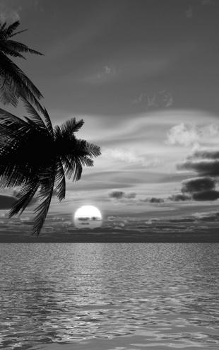 PHOTOWALL / Coconut Palm Sunset - b/w (e1902)