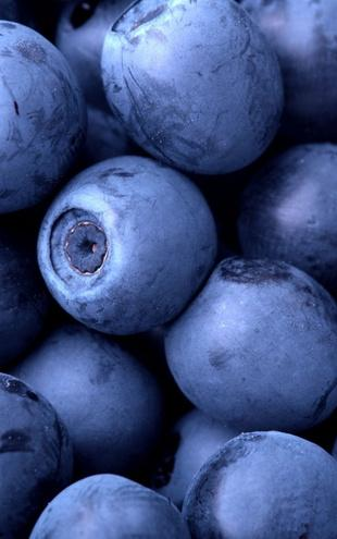 PHOTOWALL / Blueberries (e1934)