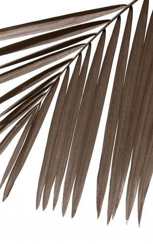 PHOTOWALL / Palm Leaves - Sepia (e1941)