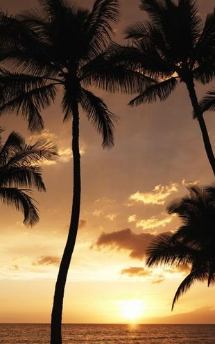 PHOTOWALL / Hawaii Sunset (e6203)