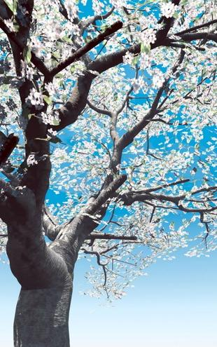 PHOTOWALL / Blossoming Cherry-Tree (e6210)