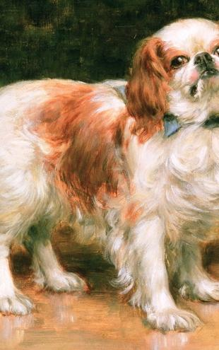 PHOTOWALL / Sheridan Knowles,George - King Charles Spaniel (e10349)