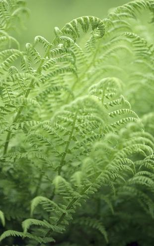 PHOTOWALL / Bracken - Fern (e19803)