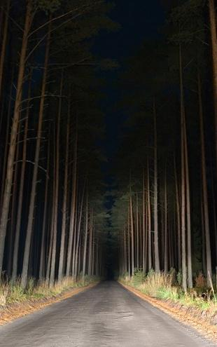 PHOTOWALL / Forestroad in the Night (e20371)