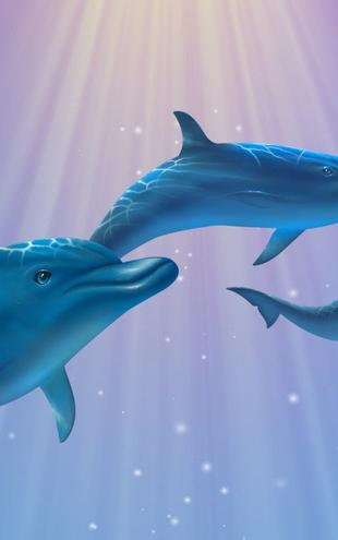 PHOTOWALL / Dolphin Light (e20960)