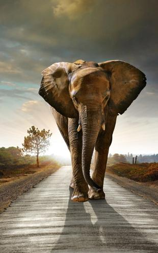 PHOTOWALL / Elephant Road (e20978)