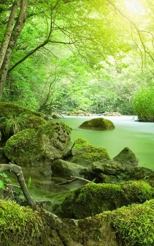 PHOTOWALL / River in the Forest (e21350)