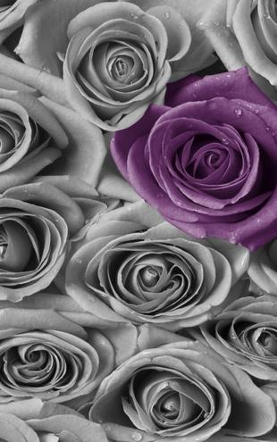 PHOTOWALL / Roses - Purple and Grey (e21465)