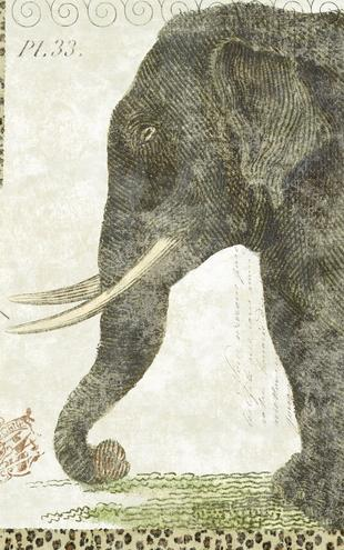 PHOTOWALL / L Elephant (e21623)