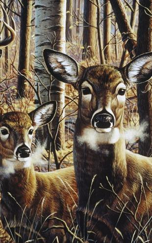 PHOTOWALL / Whitetails for Bradford (e21709)