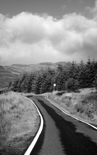 PHOTOWALL / Paved Road by Firs (e22343)