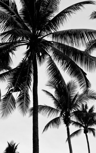 PHOTOWALL / Palm Trees (e22344)