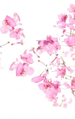 PHOTOWALL / Pink Floral flow (e22598)