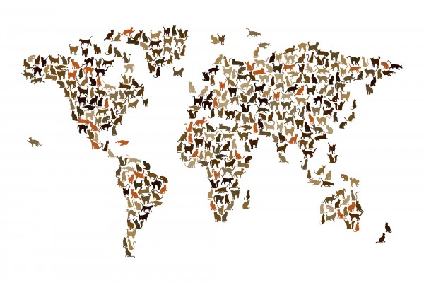 PHOTOWALL / Cats World Map (e22699)