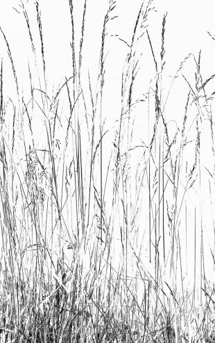 PHOTOWALL / Grass Blades bw (e22855)