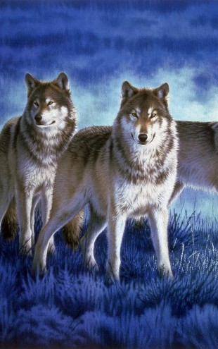 PHOTOWALL / Wolves (e22989)