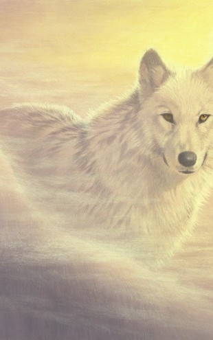 PHOTOWALL / Mystic Wolf (e22990)