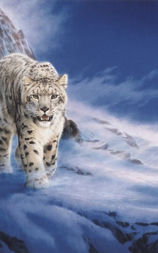 PHOTOWALL / Snow Leopard (e22991)