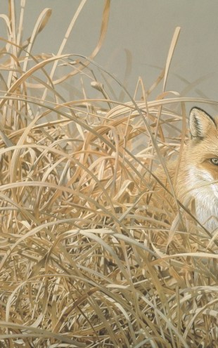 PHOTOWALL / Red Fox (e22992)