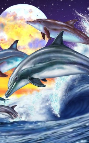 PHOTOWALL / Dolphins (e23010)