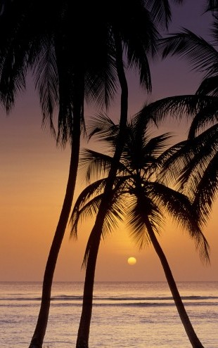 PHOTOWALL / Caribbean Sunset (e23511)