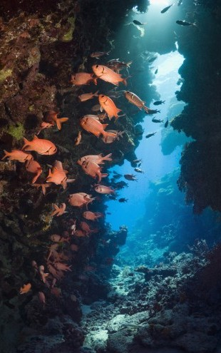PHOTOWALL / Red Soldierfish (e23622)