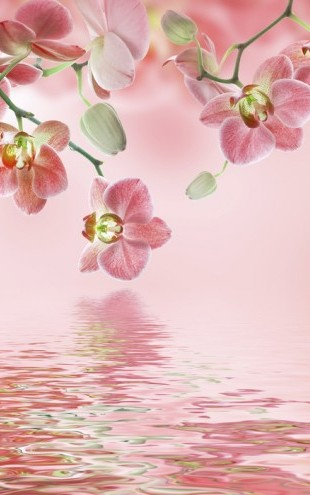 PHOTOWALL / Tropical Pink Orchid (e23865)