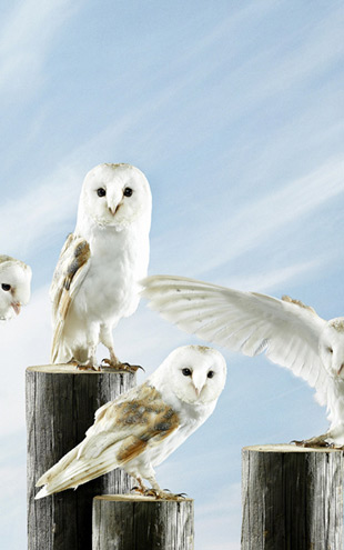 PHOTOWALL / White Owls (e23898)