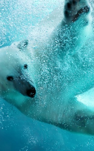 PHOTOWALL / Underwater Polar Bear (e40064)