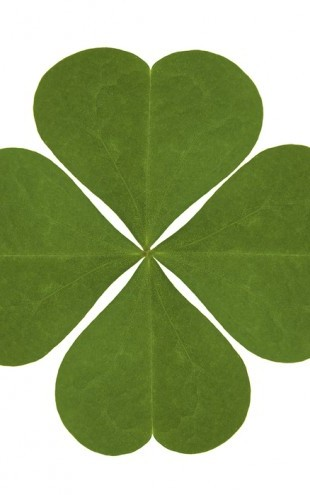 PHOTOWALL / Four Leaved Clover (e20370)