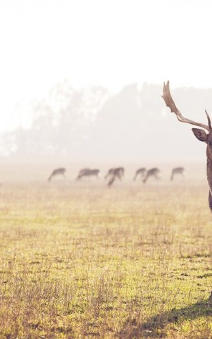 PHOTOWALL / Fallow Deer (e24362)