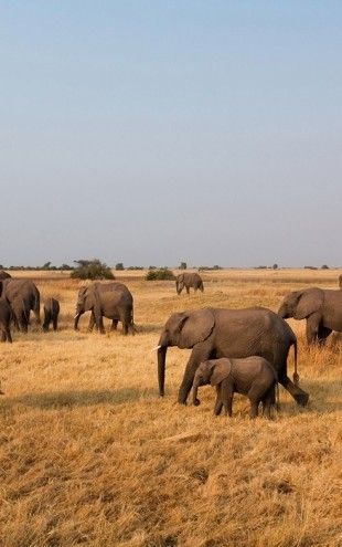 PHOTOWALL / African Elephant Herd (e24643)