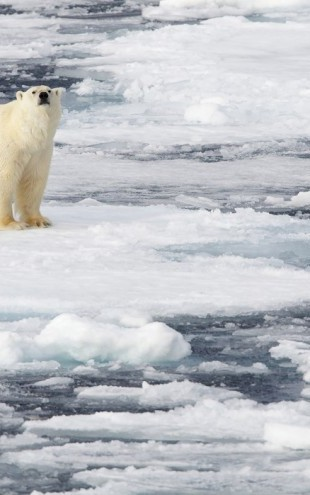 PHOTOWALL / Polar Bear on Sea Ice (e24756)