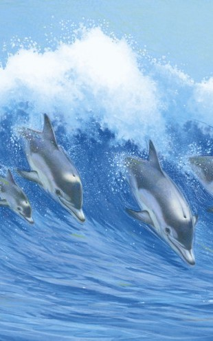 PHOTOWALL / Leaping Dolphins (e21678)