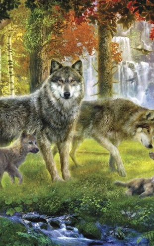PHOTOWALL / Summer Wolf Family (e21747)