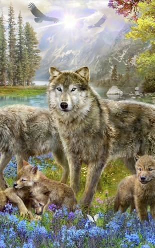 PHOTOWALL / Spring Wolf Family (e22878)