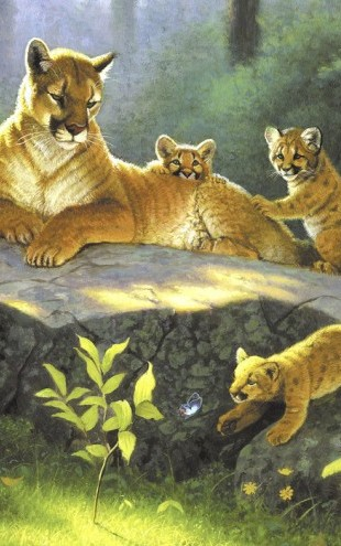 PHOTOWALL / Puma & Cubs (e22929)