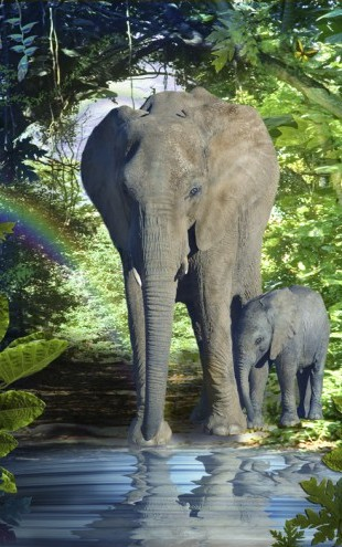 PHOTOWALL / Elephant Mother (e22976)