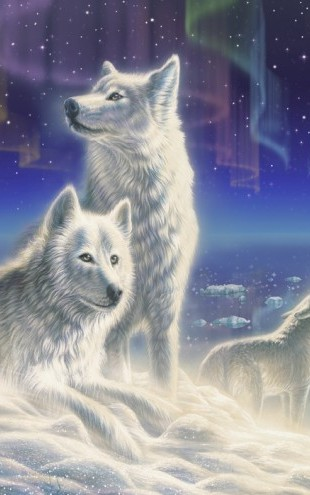 PHOTOWALL / Artic Wolves (e23155)