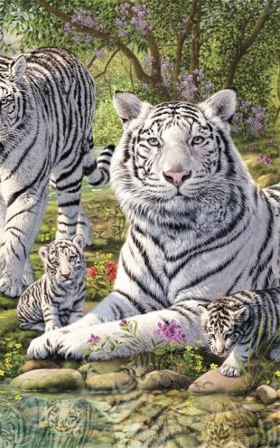 PHOTOWALL / White Tiger Clan (e23301)