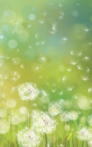 PHOTOWALL / Dandelion Spring Morning (e25467)