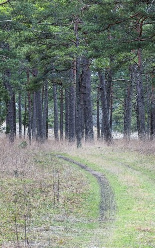 PHOTOWALL / Pine Forest Road (e25541)
