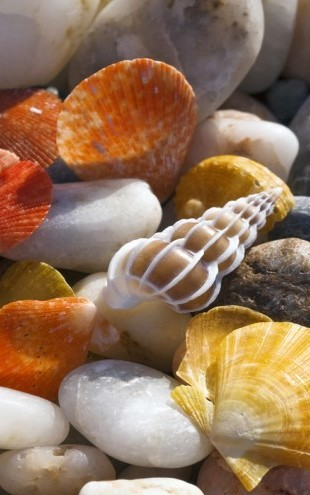 PHOTOWALL / Colorful Seashells and Pebbles (e24899)