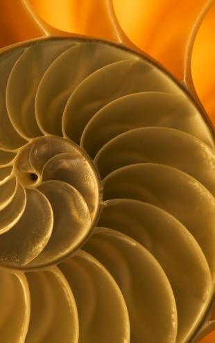 PHOTOWALL / Nautilus Shell (e24916)