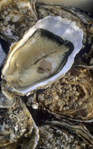 PHOTOWALL / Oysters (e24917)