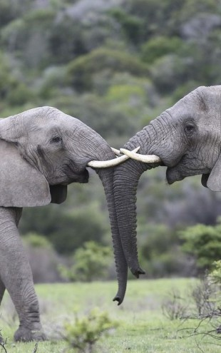 PHOTOWALL / Elephant Hug (e29607)