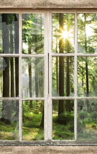PHOTOWALL / Sunset in Forest Through Broooken Window (e30160)