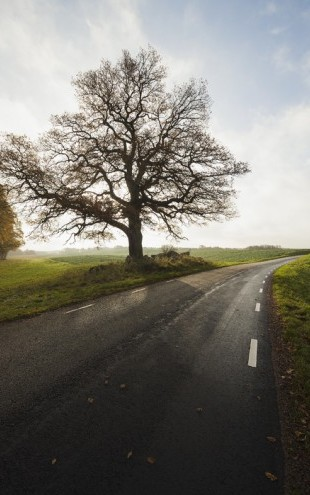 PHOTOWALL / Majestic Tree by Road (e40486)